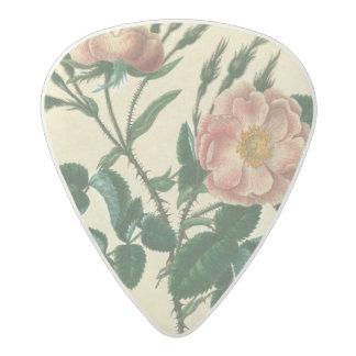 Sweet Briar Rose Acetal Guitar Pick