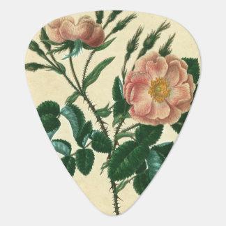 Sweet Briar Rose Plectrum
