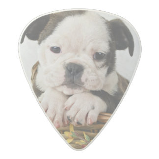Sweet Bulldog Puppy Acetal Guitar Pick
