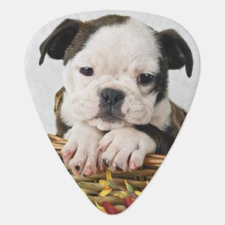 Sweet Bulldog Puppy Plectrum