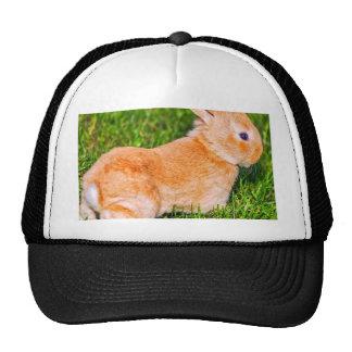 sweet bunny hats