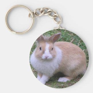 sweet bunny key chains