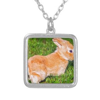 sweet bunny jewelry