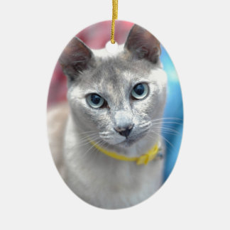 sweet christmas cat, gifts ceramic oval decoration