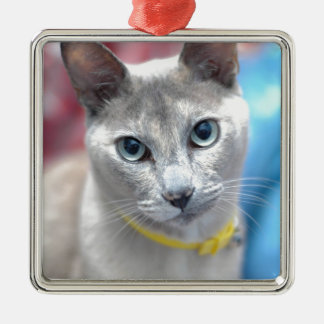 sweet christmas cat, gifts Silver-Colored square decoration