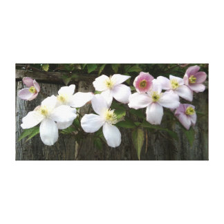 Sweet Clematis Canvas Print