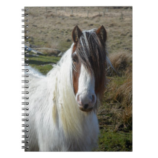 Sweet Connemera Pony Notebooks