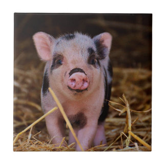 Sweet Cute Pig Small Square Tile
