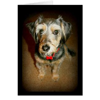 Sweet Dog Thinking Of You Card