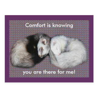 Sweet Dreams Ferrets Post Cards