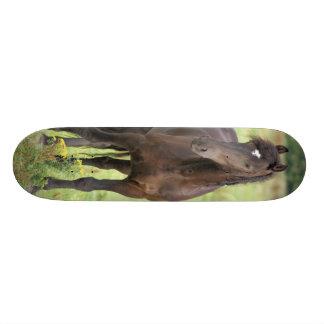 Sweet Friesian Horse Skateboard