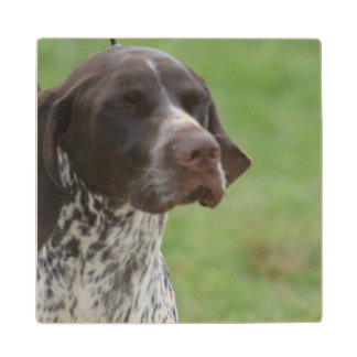 Sweet German Shorthaired Pointer Wood Coaster