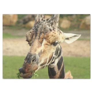 sweet giraffe. tissue paper