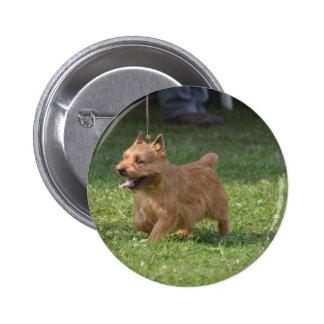 Sweet Glen of Imaal Terrier Buttons