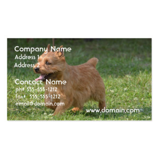 Sweet Glen of Imaal Terrier Business Card Template