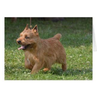 Sweet Glen of Imaal Terrier Card