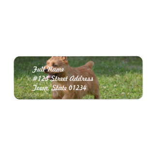 Sweet Glen of Imaal Terrier Return Address Label