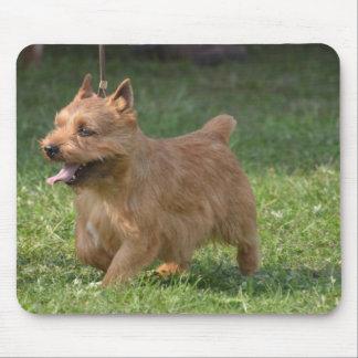 Sweet Glen of Imaal Terrier Mouse Pad