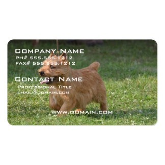 Sweet Glen of Imaal Terrier Pack Of Standard Business Cards