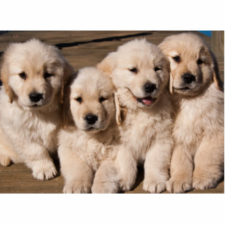 Sweet Golden Retriever Puppies Photo Sculpture Magnet