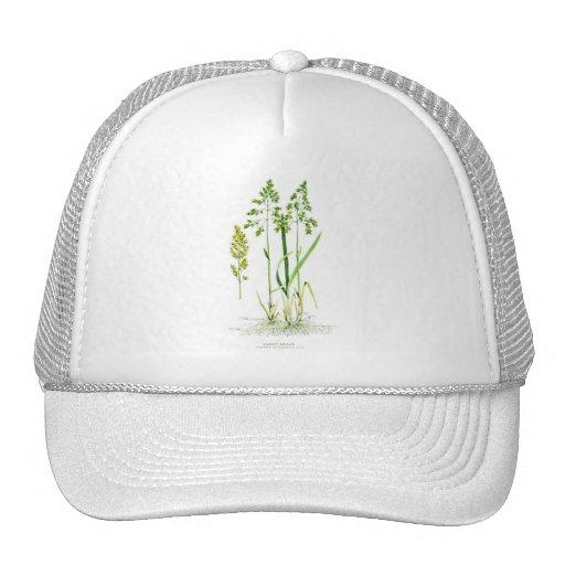 Sweet Grass Botanical Mesh Hat