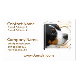 Sweet Greater Swiss Mountain Dog Business Cards