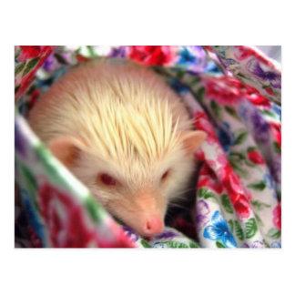 sweet hedgehog postcard