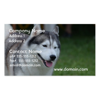 Sweet Husky Pack Of Standard Business Cards