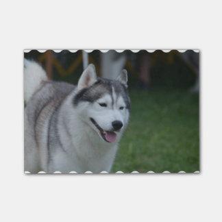 Sweet Husky Post-it Notes
