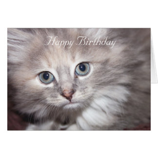 sweet kitten birthday card