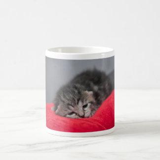 Sweet kitty basic white mug