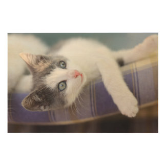 Sweet Kitty In Plaid Bed Wood Prints