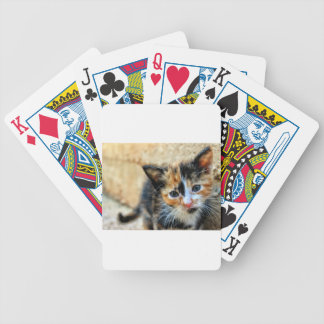 Sweet Kitty looking at YOU Bicycle Playing Cards
