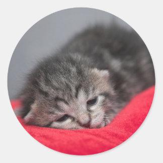 Sweet kitty round sticker