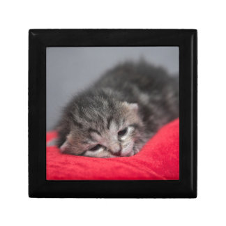 Sweet kitty small square gift box