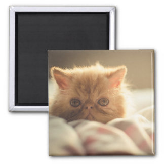 Sweet kitty stay warm square magnet