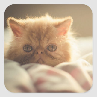 Sweet kitty stay warm square sticker