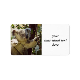 sweet Koala baby Address Label