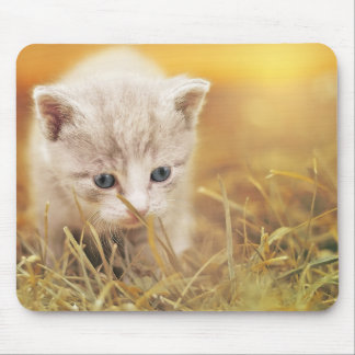 Sweet Little Cat Mouse Pad