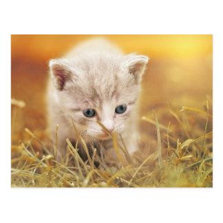 Sweet Little Cat Postcard
