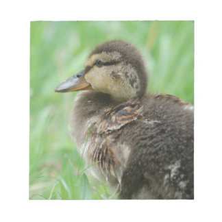 Sweet little duckling notepad