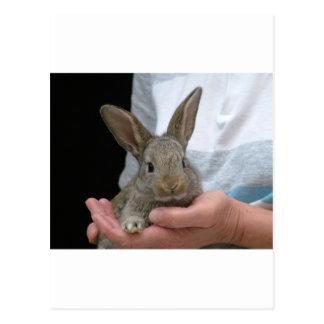 sweet little rabbit post card