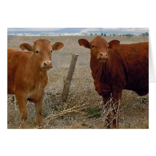 Sweet Miss You - Red Cow Animal Humor - Ranch Cards