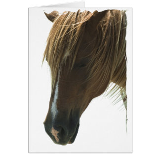 Sweet Mustang Horse Greeting Card