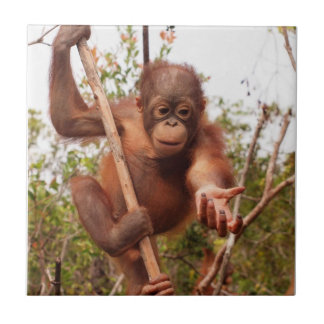 Sweet Orphan Orangutan Charity Ceramic Tile