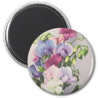 Sweet Pea 1907 Magnets