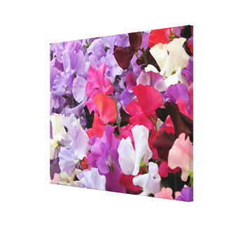 Sweet peas flowers in bloom canvas print