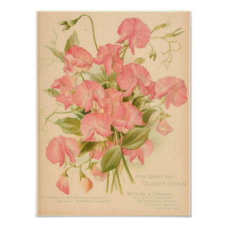 Sweet Peas Flowers Poster
