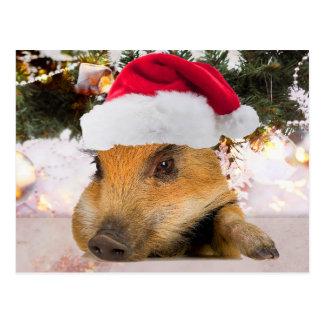 Sweet Pig In Santa Hat Christmas Tree Postcard