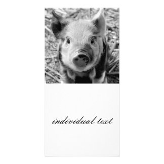 sweet piglet, black white picture card